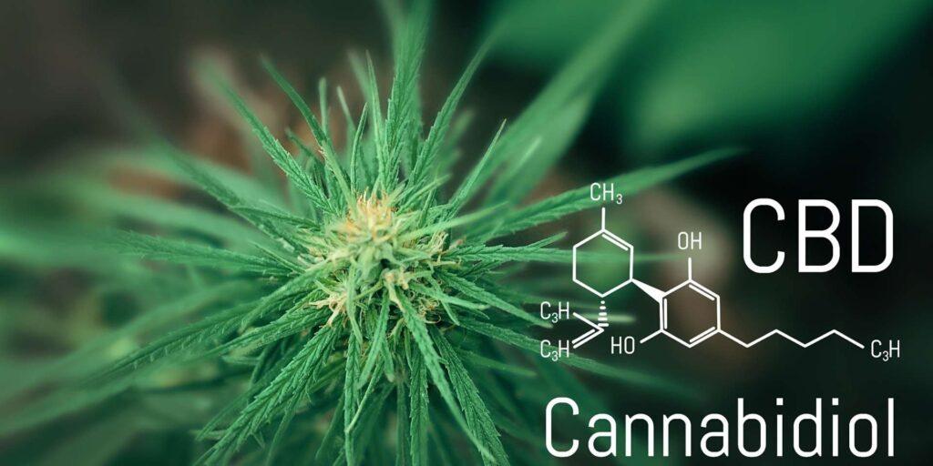 Le cannabinol (le nom scientifique du CBD)