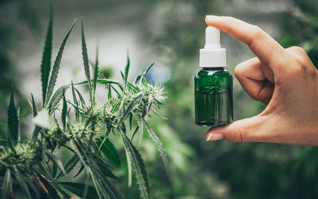 Différence entre l'huile de CBD et l'huile de cannabis